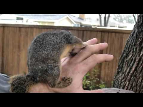 hqdefault nibbler squirrel gets a nest box youtube,Red Squirrel House Plans