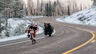 Bear charges Cyclists in Russia!!!