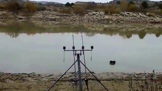 INCREDIBLE!!!! 2- 50+lb carp caught on the Ebro (winter)