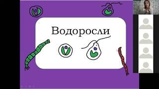 Водоросли, Мхи, Папоротники