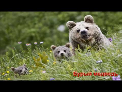 Южный Урал_83. Заповедники и Национальные парки Южного Урала.