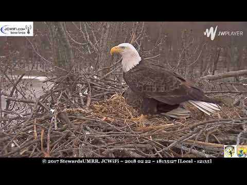 Flyby, sitter alarm calls, support arrives - ©Trio Bald Eagles, ©SUMRR