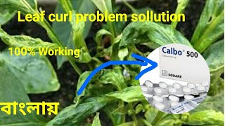 Pepper leaf curl problem!Just use Calcium tablate-calbo500mg/Shelcal500mg(100% working)(in Bengali)