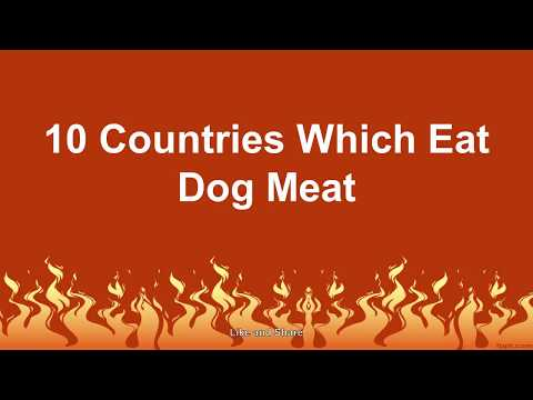 Top 10 Countries Which Eat Dog Meat in the World
