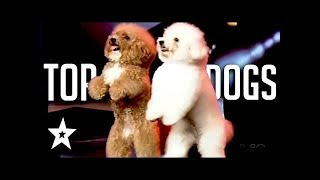 Incredible Dogs celebrating the auditions AMERICAS GOT TALENT AUDITIONS