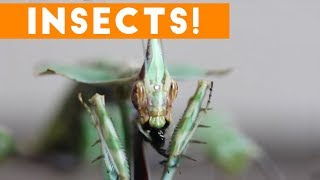 Creepiest Insects and Spiders of 2017 | Funny Pet Videos