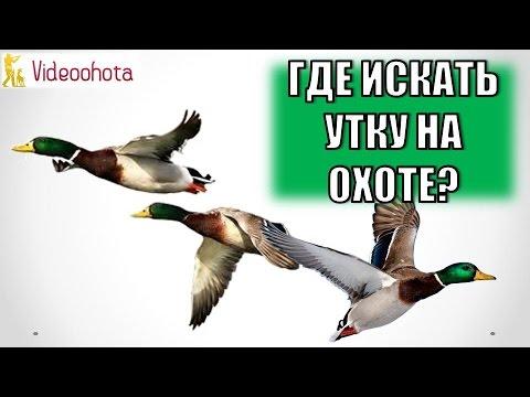 Охота на утку зимой с собакой - Ютуб видео...