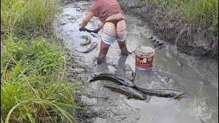 カンボジアの伝統的な釣り - スマートな女の子によるすばらしい釣り - カンボジア部152での釣り方 thumbnail