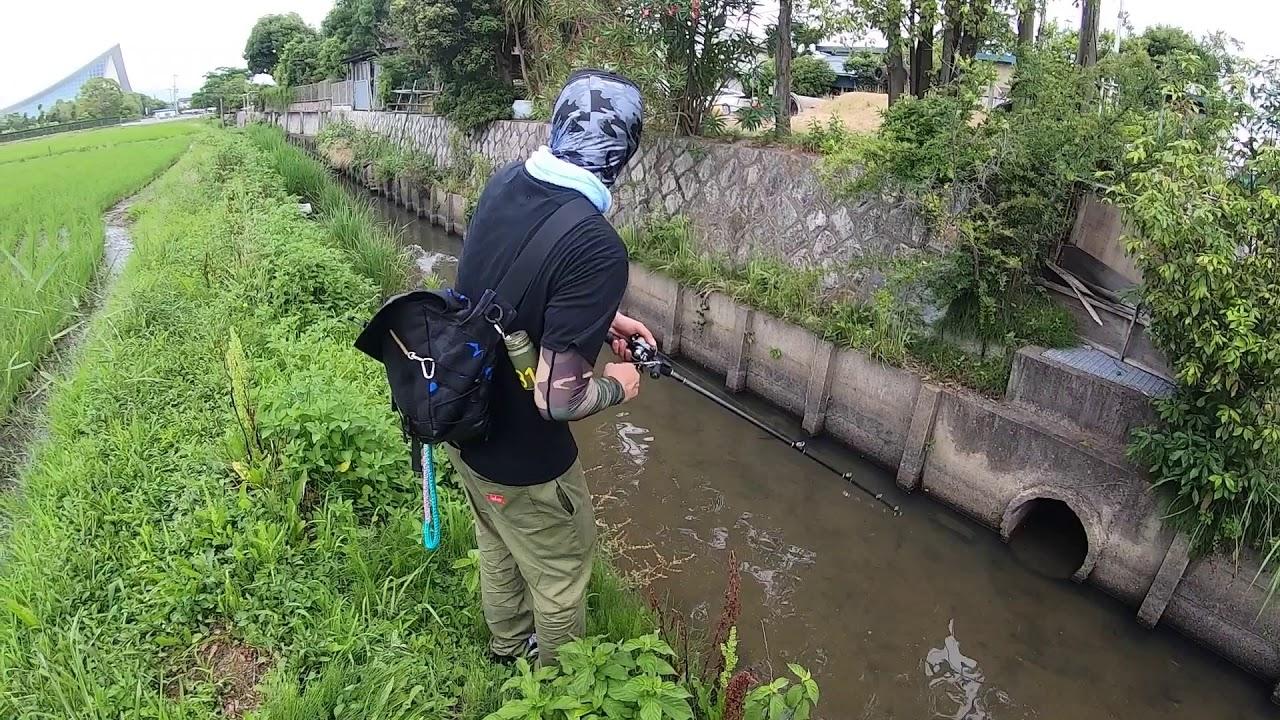 【琵琶湖釣行】水路はヤツのパラダイス‼︎