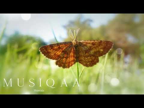 Shantala ⋄ Baba Hanuman ⋄ Sacred Chant ⋄ Meditation ⋄ Yoga ⋄ Devotional Music