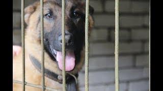 Как живут служебные собаки кинологического центра в Твери