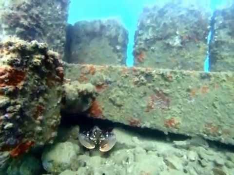 Diving weymouth pleasure pier