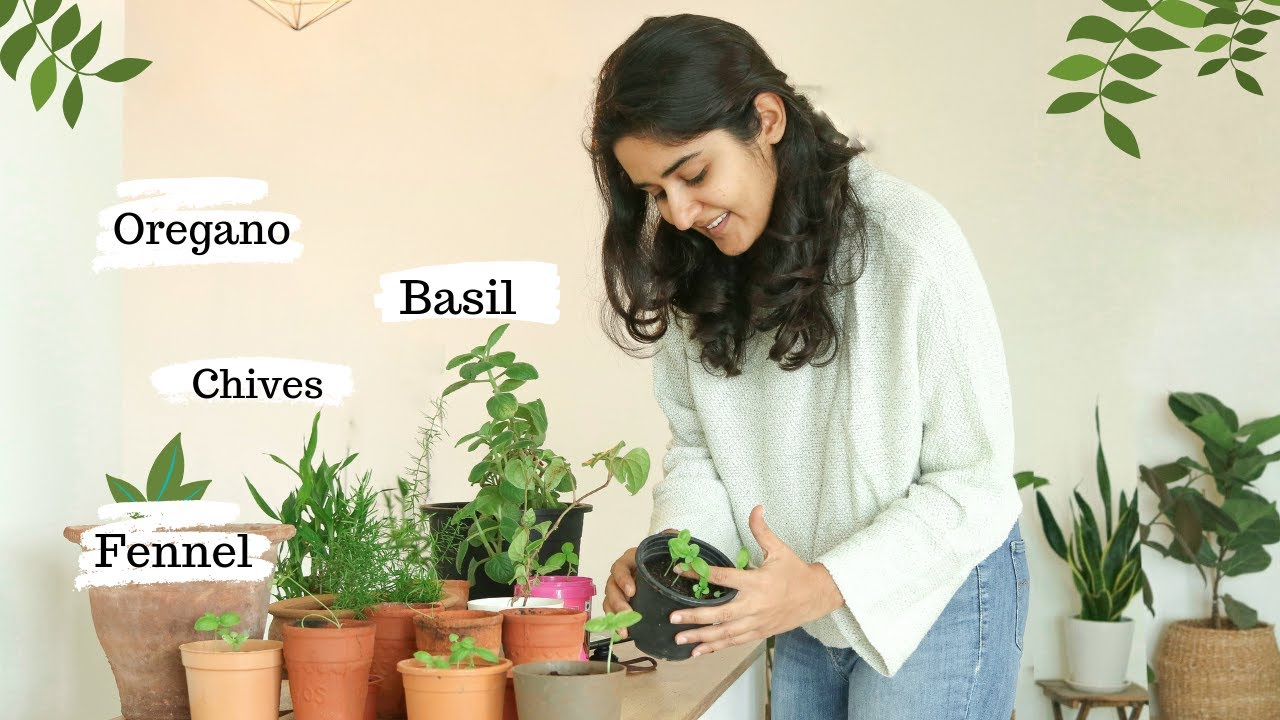My Experience Growing Herbs - Basil, Oregano, Chives, Fennel | Success &  Failure