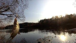 Осенний лещ на маховую удочку Рыбалка на реке