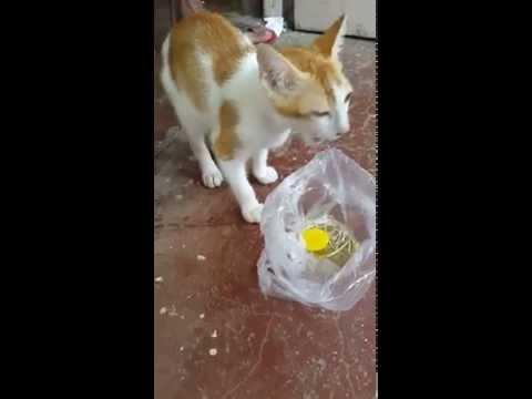 Cat at IIT Bombay hostel
