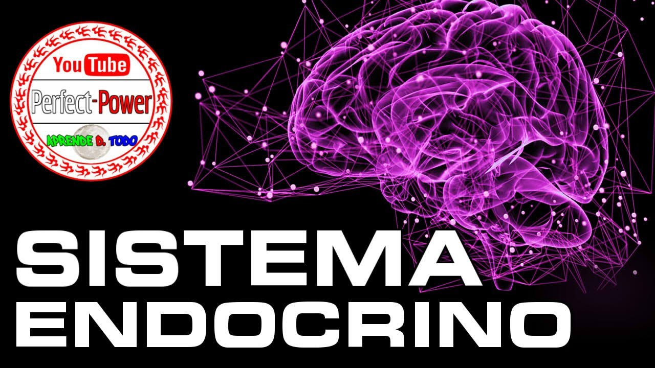 SISTEMA ENDOCRINO | Power Points Listos [PerfectPower] - DESCARGA ...
