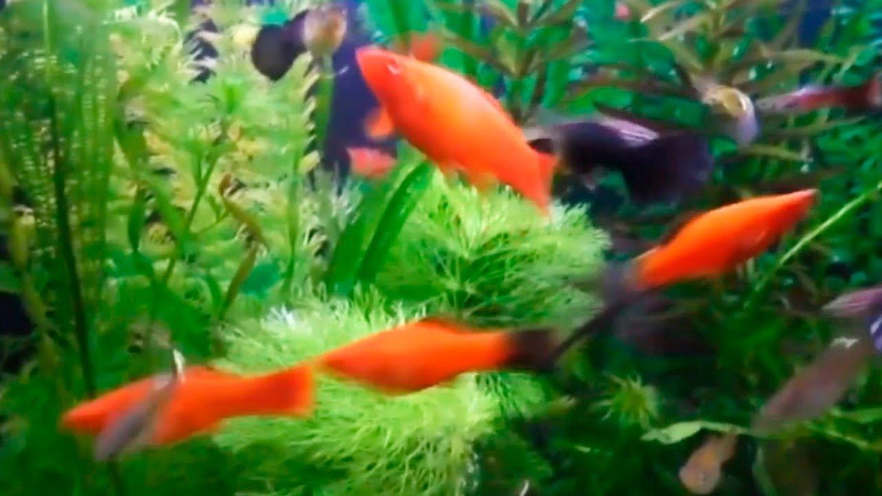 Аквариумные рыбки и Аквариумные растения | Аквариум 140 литров