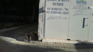 Крутые разборки в Израиле 2016