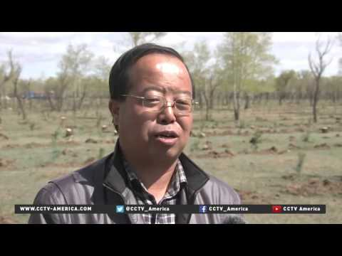 China forests: Project aims to replace dying trees in Hebei Province