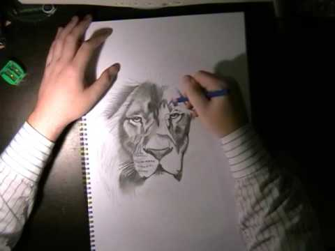 How To Draw Lion Fur Colored Pencil