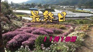 NHK(NVC)高知ビデオクラブ会員横田宏さん投稿ビデオ山北の懸崖...