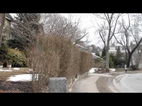 Boston MA Brookline Luxury Home for Sale