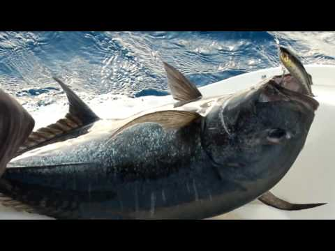 St Lazarus Bank Fishing v3c1 with Life Masters & Tony Dovale