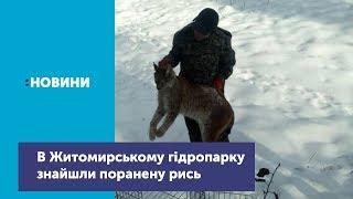 В Житомирському гідропарку знайшли поранену рись_Канал UA: ЖИТОМИР 21.01.19