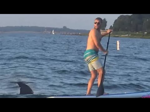 Remote Controlled Shark Attack Prank 2018