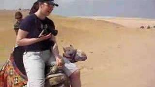 camel riding near giza pyramids