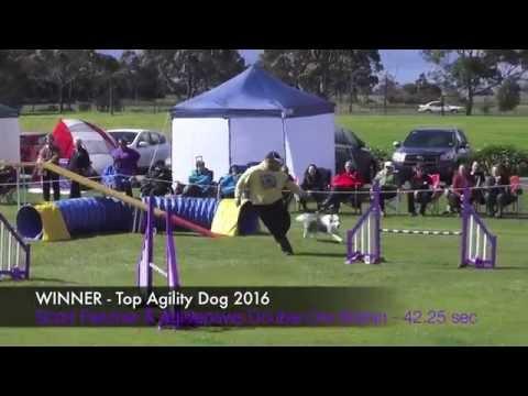 TOP AGILITY DOG 2016