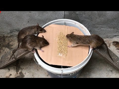 The Best Video I've Ever Seen #21 | Top 10 Piège à Souris électrique