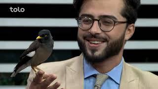 بامداد خوش - کاه فروشی - صحبت با حاجی اکبر زرگر درمورد پرنده مینا