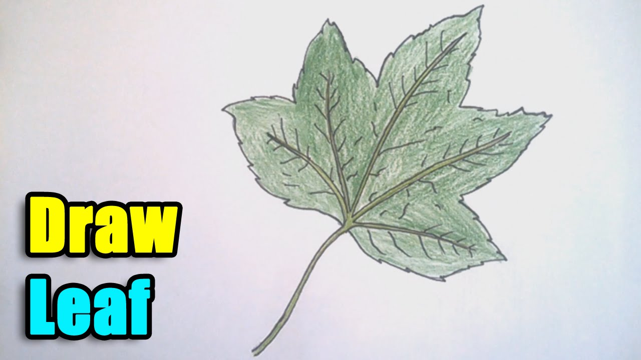 how to draw a leaf step by step