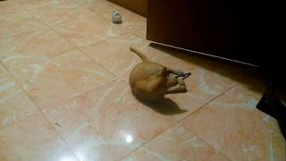 Funny cat playing with paper ball and pen