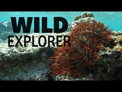 Wild Explorer - Northern Marianas Island Reef