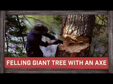 Felling Giant Tree with an Axe