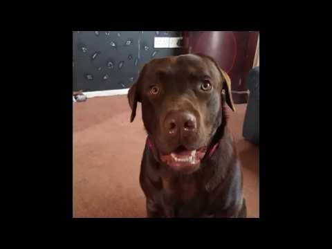 Dog Catching Toys In Slow Motion