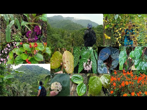 Rare Plants adventure in the forest Philippines