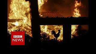 Greece wildfires: '60 dead' in holiday area - BBC News