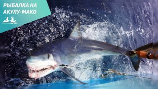 Рыбалка на акулу-мако и рыбу парусника в Мексике