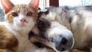 Смешное видео про домашних животных. Лучший друг собаки это -кошка!