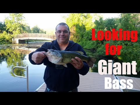 2019 New Jersey Fishing - Looking For Giant Bass!