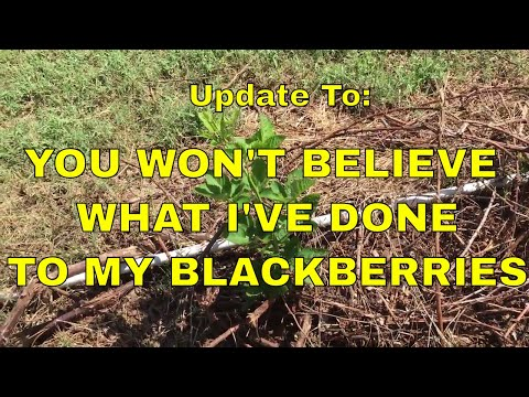 """UPDATE To ~ """"You Won't Believe What I've Done..."""""""
