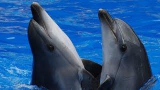 Харьковский дельфинарий Немо. Морские котики, морской лев, киты и дельфины