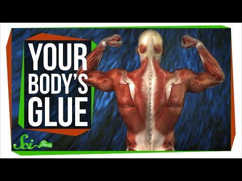 Fascia: The Body's Remarkable, Functional Glue