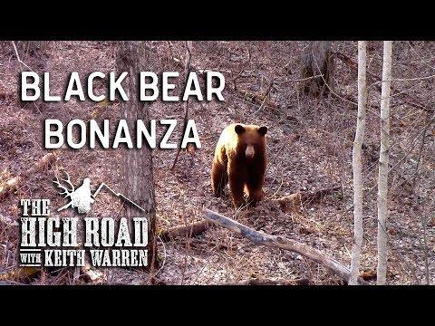 Spring Alberta Bear Hunting - Black Bear Bonanza | The High Road with Keith Warren
