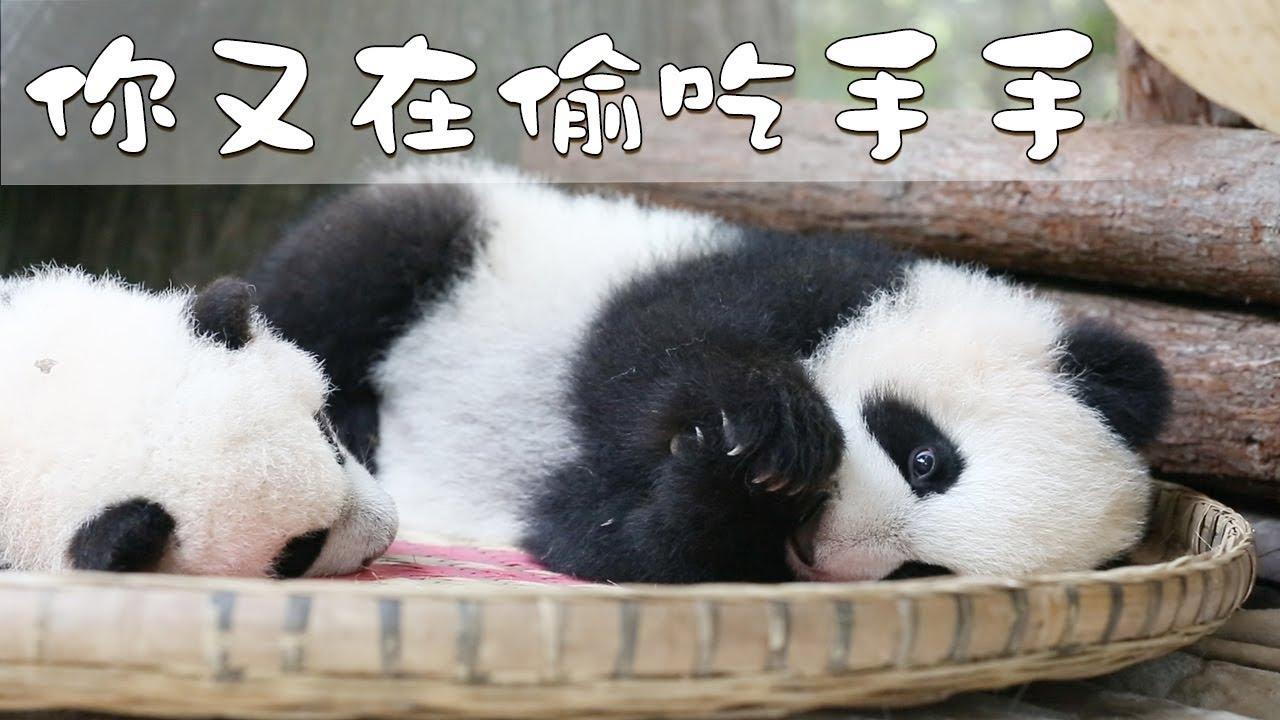 《熊貓早晚安》說!你在偷吃什麼呢? | iPanda熊貓頻道 - YouTube