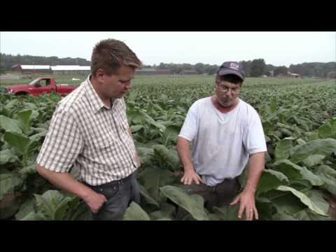 Connecticut Tobacco Farm - America's Heartland