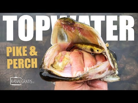 TOPWATER PIKE and PERCH from the Shore - using a Deeper Sonar (River Fishing)